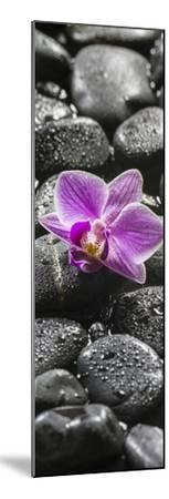 Orchid Blossom on Black Stones-Uwe Merkel-Mounted Photographic Print