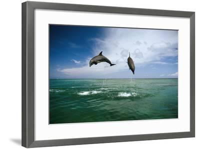 Sea, Ordinary Dolphins, Delphinus Delphis, Jump, Series-Frank Lukasseck-Framed Photographic Print