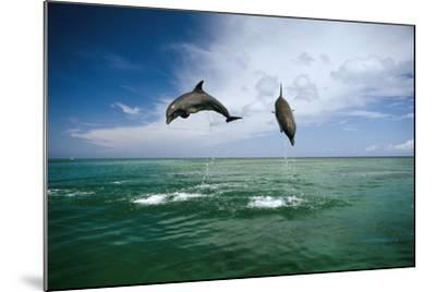 Sea, Ordinary Dolphins, Delphinus Delphis, Jump, Series-Frank Lukasseck-Mounted Photographic Print