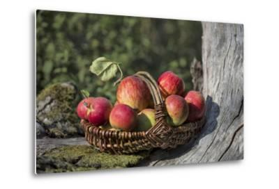 Apples, Basket, Exterior, Old Tree Trunk-Andrea Haase-Metal Print