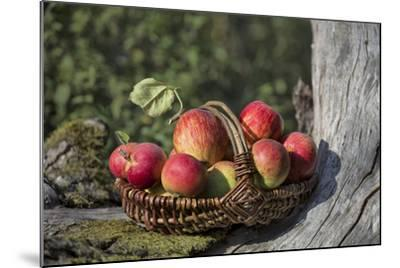 Apples, Basket, Exterior, Old Tree Trunk-Andrea Haase-Mounted Photographic Print