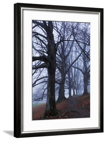 Trees, Black Poplars, Late Autumn-Herbert Kehrer-Framed Photographic Print