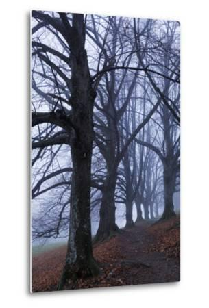 Trees, Black Poplars, Late Autumn-Herbert Kehrer-Metal Print