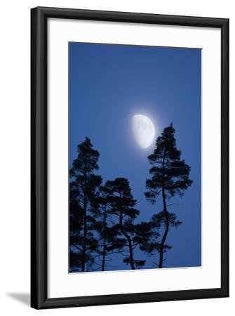 Moon, Trees, Jaws, Silhouette, at Night-Herbert Kehrer-Framed Photographic Print