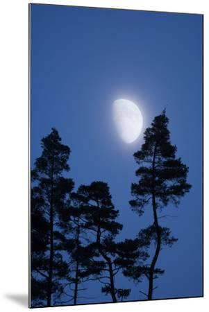 Moon, Trees, Jaws, Silhouette, at Night-Herbert Kehrer-Mounted Photographic Print