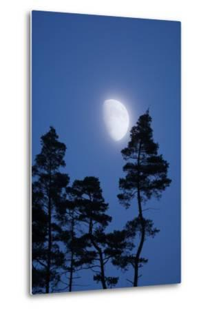 Moon, Trees, Jaws, Silhouette, at Night-Herbert Kehrer-Metal Print