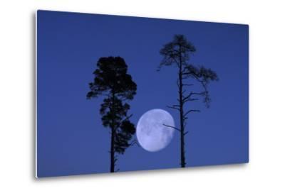 Moon, Trees, Jaws, Silhouette, at Night-Herbert Kehrer-Metal Print