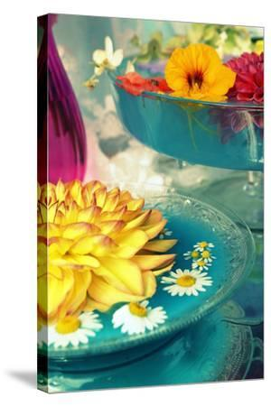 Table Decoration, Coloured Blossoms and Water Bowl-Alaya Gadeh-Stretched Canvas Print