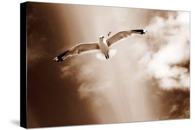 White Sea Gulls Flying over the Dunes in the Sky in Rich Sepia Tones-Alaya Gadeh-Stretched Canvas Print