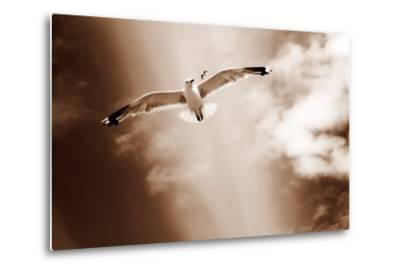 White Sea Gulls Flying over the Dunes in the Sky in Rich Sepia Tones-Alaya Gadeh-Metal Print