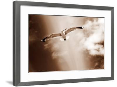 White Sea Gulls Flying over the Dunes in the Sky in Rich Sepia Tones-Alaya Gadeh-Framed Photographic Print