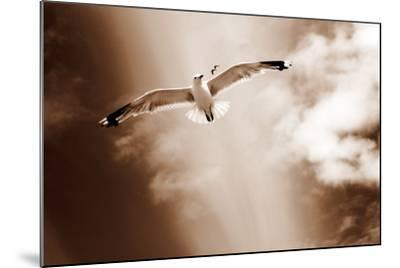White Sea Gulls Flying over the Dunes in the Sky in Rich Sepia Tones-Alaya Gadeh-Mounted Photographic Print