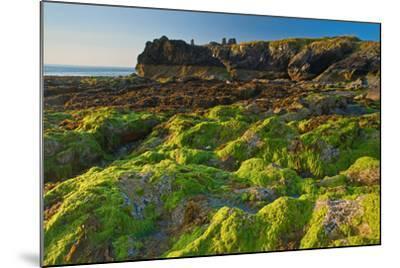 Ireland, Wicklow Coast-Thomas Ebelt-Mounted Photographic Print