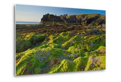 Ireland, Wicklow Coast-Thomas Ebelt-Metal Print