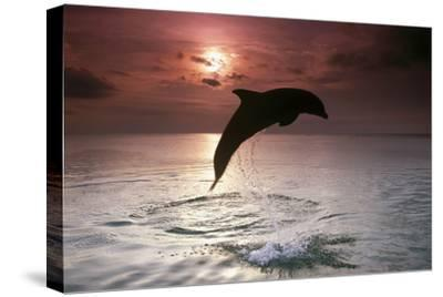 Sea, Silhouette, Ordinary Dolphin, Delphinus Delphis, Jump-Frank Lukasseck-Stretched Canvas Print