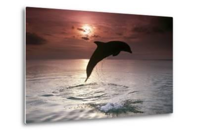 Sea, Silhouette, Ordinary Dolphin, Delphinus Delphis, Jump-Frank Lukasseck-Metal Print