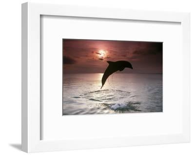 Sea, Silhouette, Ordinary Dolphin, Delphinus Delphis, Jump-Frank Lukasseck-Framed Photographic Print