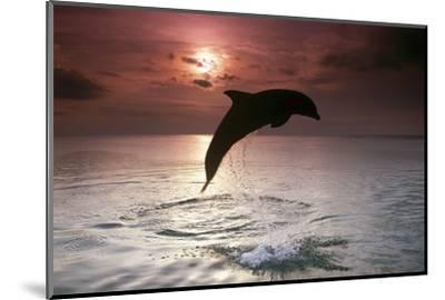 Sea, Silhouette, Ordinary Dolphin, Delphinus Delphis, Jump-Frank Lukasseck-Mounted Photographic Print