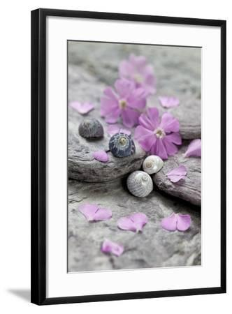 Pink Blossoms, Stone, Snail Shell-Andrea Haase-Framed Photographic Print