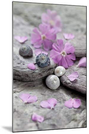 Pink Blossoms, Stone, Snail Shell-Andrea Haase-Mounted Photographic Print