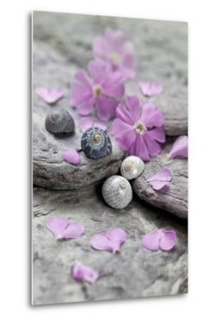 Pink Blossoms, Stone, Snail Shell-Andrea Haase-Metal Print