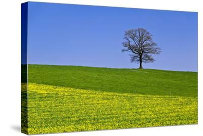 Germany, Bavaria, Upper Bavaria, Degerndorf (Village), Spring Meadow, Oak-Udo Siebig-Stretched Canvas Print