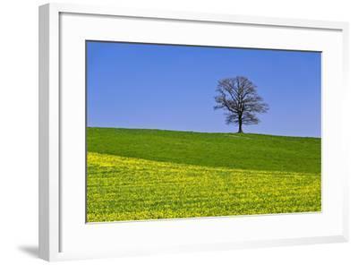 Germany, Bavaria, Upper Bavaria, Degerndorf (Village), Spring Meadow, Oak-Udo Siebig-Framed Photographic Print