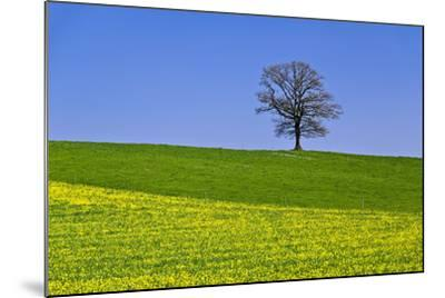 Germany, Bavaria, Upper Bavaria, Degerndorf (Village), Spring Meadow, Oak-Udo Siebig-Mounted Photographic Print