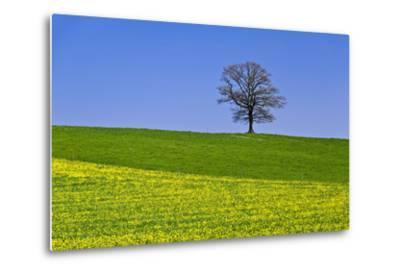 Germany, Bavaria, Upper Bavaria, Degerndorf (Village), Spring Meadow, Oak-Udo Siebig-Metal Print