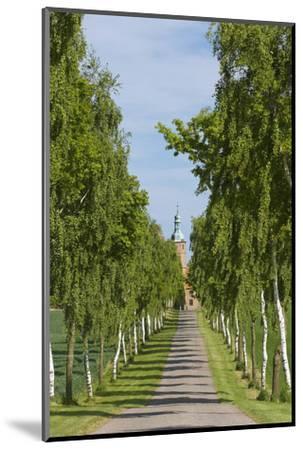 Denmark, Jutland, Avenue of Birches, Country House-Chris Seba-Mounted Photographic Print