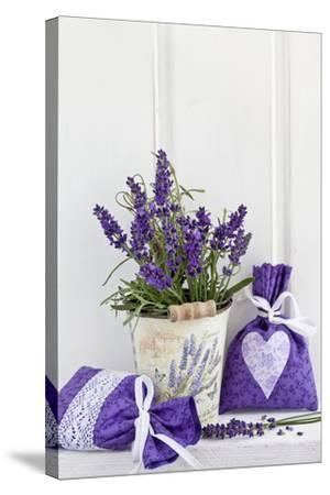 Lavender, Blossoms, Fragrance Sachets, Flowerpot-Andrea Haase-Stretched Canvas Print