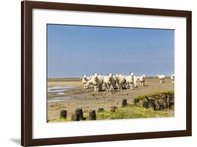 Flock of Sheep at Coast of the Northern Sea- Photo-Active-Framed Photographic Print