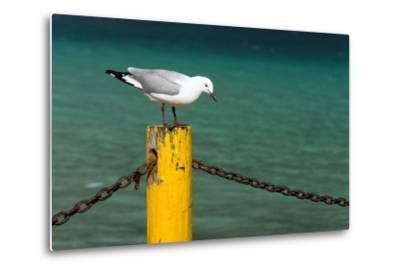 South Africa, Houtbay, Harbour, Gull-Catharina Lux-Metal Print