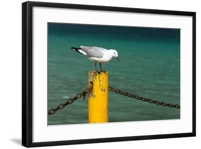 South Africa, Houtbay, Harbour, Gull-Catharina Lux-Framed Photographic Print