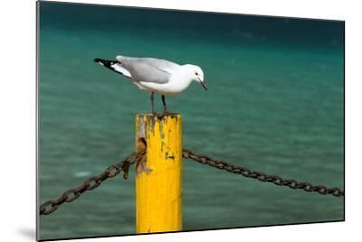 South Africa, Houtbay, Harbour, Gull-Catharina Lux-Mounted Photographic Print