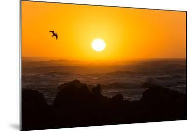South Africa, Garden Route, Cape Agulhas, Sundown-Catharina Lux-Mounted Photographic Print