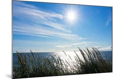 Peninsula Reykjanes, Iceland, Gardskagi, Sea Grass and Sun-Catharina Lux-Mounted Photographic Print