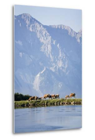 Austria, Styria, Hoher Dachstein, Mountain Lake, Cows, Mountain Scenery-Rainer Mirau-Metal Print