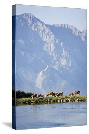 Austria, Styria, Hoher Dachstein, Mountain Lake, Cows, Mountain Scenery-Rainer Mirau-Stretched Canvas Print