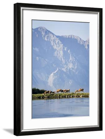 Austria, Styria, Hoher Dachstein, Mountain Lake, Cows, Mountain Scenery-Rainer Mirau-Framed Photographic Print