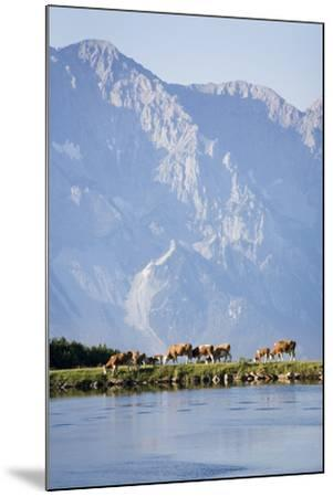 Austria, Styria, Hoher Dachstein, Mountain Lake, Cows, Mountain Scenery-Rainer Mirau-Mounted Photographic Print