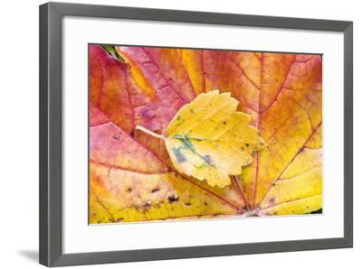Autumn Leaves, Close-Up-Frank Lukasseck-Framed Photographic Print