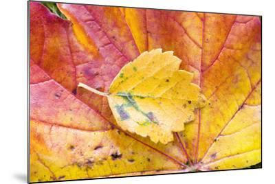 Autumn Leaves, Close-Up-Frank Lukasseck-Mounted Photographic Print