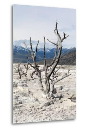 USA, Yellowstone National Park, Mammoth Hot Springs, Main Terrace-Catharina Lux-Metal Print