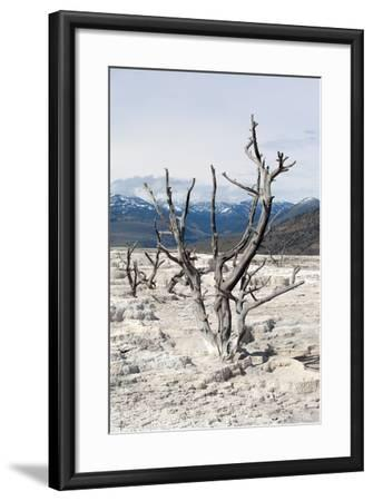 USA, Yellowstone National Park, Mammoth Hot Springs, Main Terrace-Catharina Lux-Framed Photographic Print