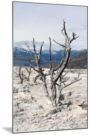 USA, Yellowstone National Park, Mammoth Hot Springs, Main Terrace-Catharina Lux-Mounted Photographic Print