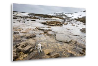 The North Atlantic, Bear Island, Mountain Landscape, Rocks, Snow, Melt Water-Frank Lukasseck-Metal Print