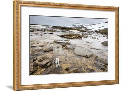 The North Atlantic, Bear Island, Mountain Landscape, Rocks, Snow, Melt Water-Frank Lukasseck-Framed Photographic Print