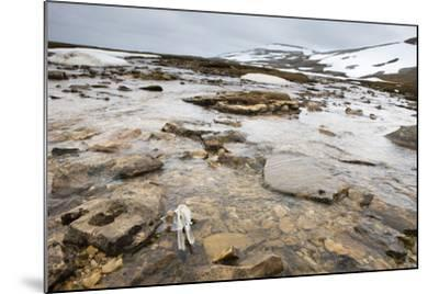 The North Atlantic, Bear Island, Mountain Landscape, Rocks, Snow, Melt Water-Frank Lukasseck-Mounted Photographic Print