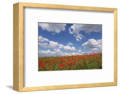 Schleswig-Holstein, Field with Poppies-Catharina Lux-Framed Photographic Print
